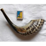 Шофар (бараний рог) для трубления, 36-39см по изгибу