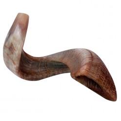 Шофар (бараний рог) для трубления