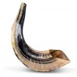 Шофар (бараний рог) для трубления, 32-37см